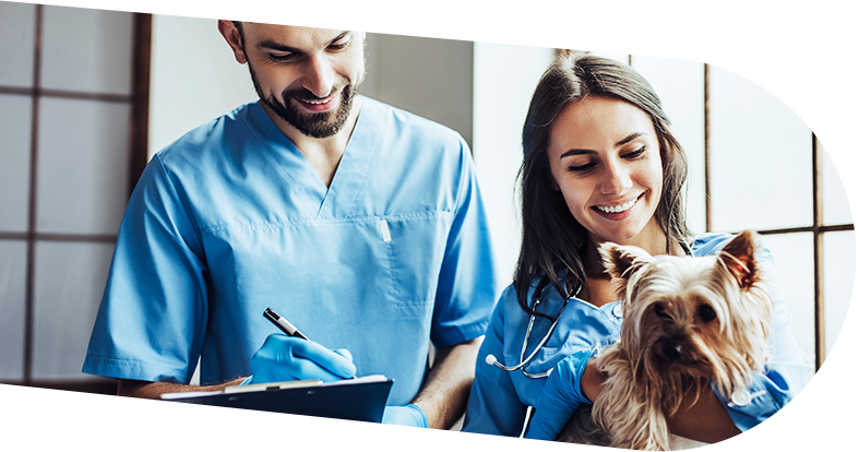 Two veterinarians holding dog