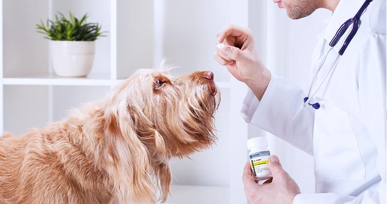 dog getting pill