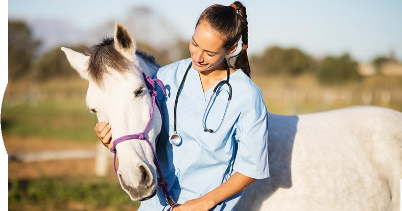 Equine Veterinarian