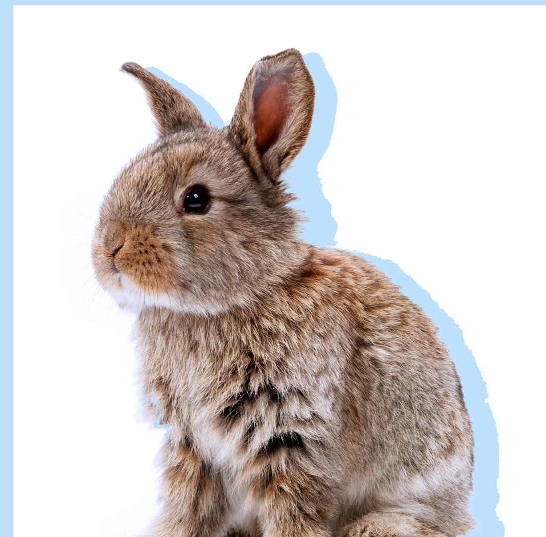 Healthy bunny